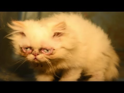 After Rescuers Found This Abused Cat In A Puppy Mill, Vets Feared The Worst