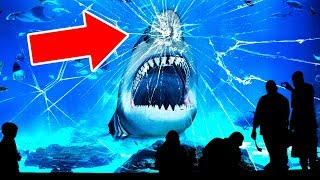 Why No Aquarium In the World Has a Great White Shark?