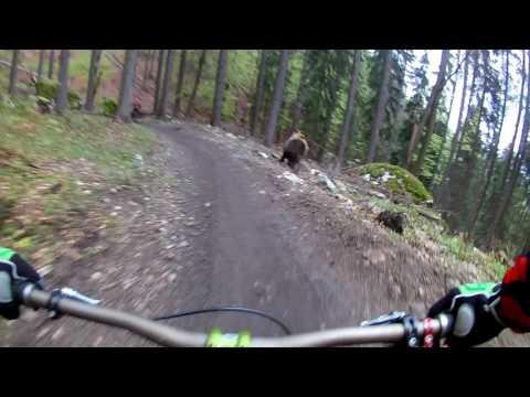 watch Bear on the Bikepark // SLOW MOTION  // Malino Brdo SLOVAKIA