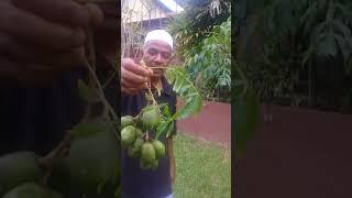 Kebun Pak Subandi