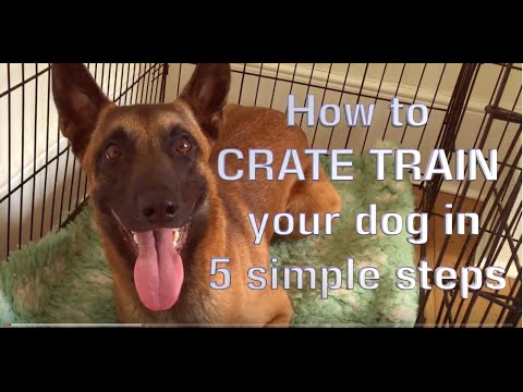 How to CRATE TRAIN your Dog in 5 simple steps!