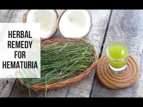 Arugampul juice to cure hematuria