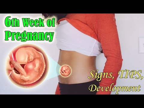 6TH WEEK OF PREGNANCY, THE SIGNS, GROWTHS AND TIPS TO A HEALTHY PREGNANCY.