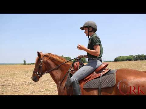 Trail Riding for Beginners