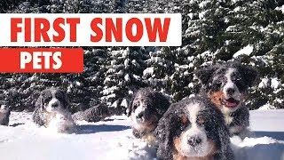 First Snow Pets