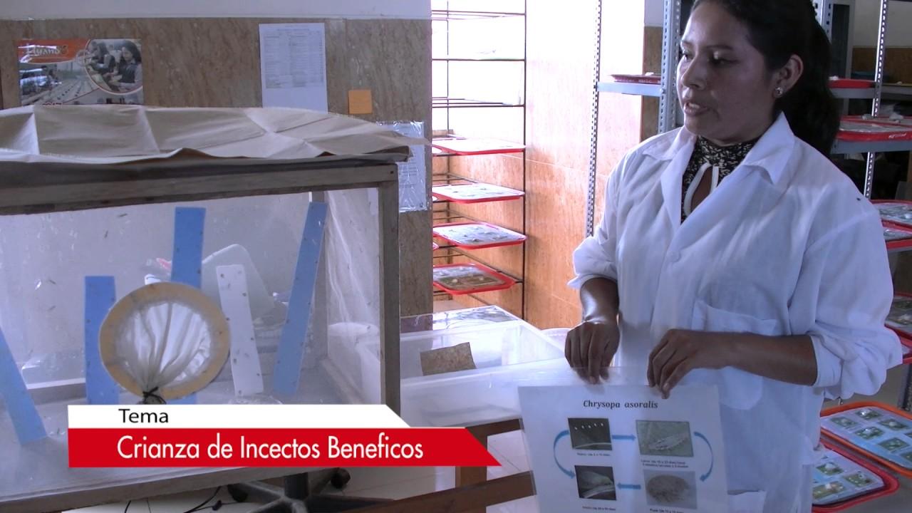 CRIANZA DE INSECTOS BENEFICOS