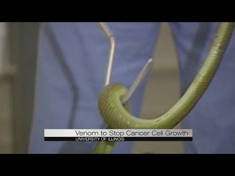 Venom to stop cancer cell growth