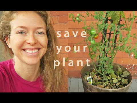 How to Save a Potted Plant from Dying