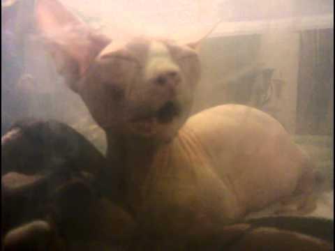 Tatiyana 3 days after she started reverse sneezing