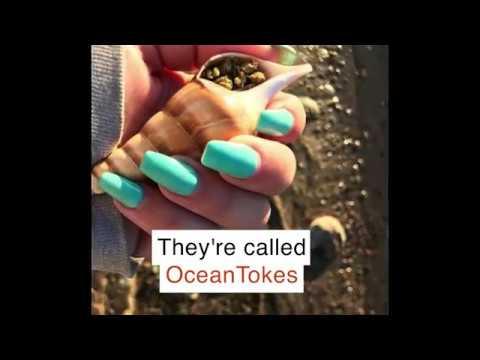 OceanTokes Seashell Smoking Pipes