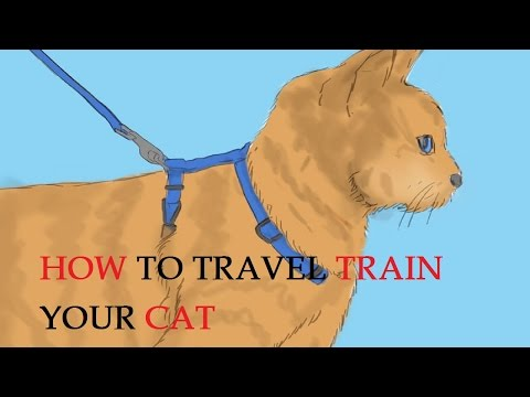 How to Travel Train Your Cat
