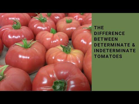 Determinate and Indeterminate