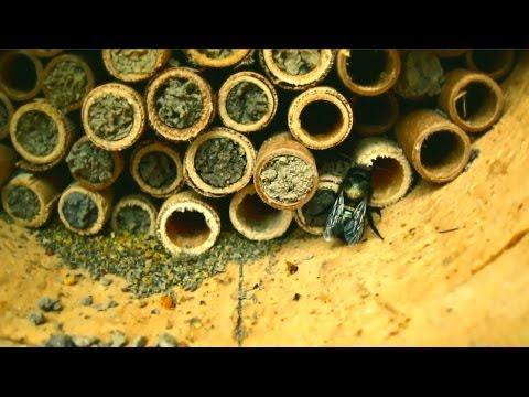 Mason Bees Micro Documentary