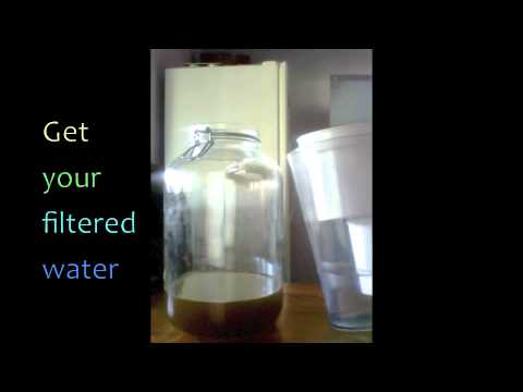 How to make Kombucha From Store Bought GT's