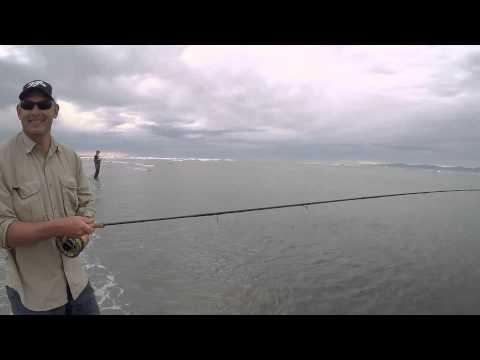 Fly Fishing For Kahawai- NZ