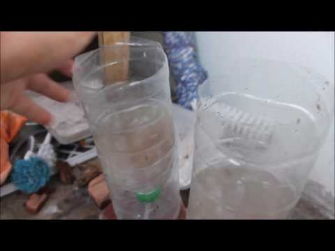 How to hatch baby brine shrimp....in my way so easy