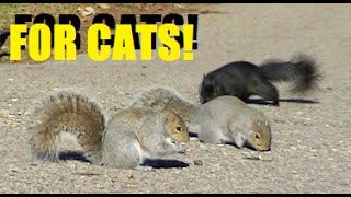 ENTERTAINMENT FOR CATS AND DOGS TO WATCH ! Squirrels,Bunnies,Pigeons, Birds,