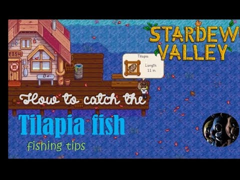 how to catch the Tilapia fish - 'Stardew Valley'