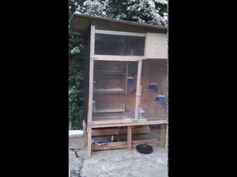 My small racing pigeon loft - PlayTunez World Of Videos