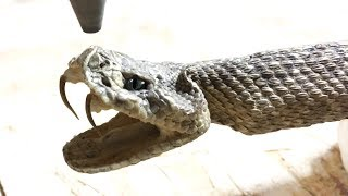 Download Rattlesnake Cut In Half With 60,000 PSI Waterjet - whats inside a rattle snake Video