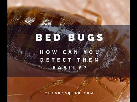 Easy Bed Bug Detection In Five Steps [The Bug Squad]