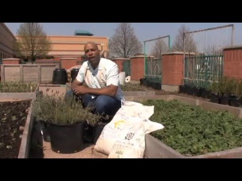 Organic Vegetable Gardening - Compost Starter Tips with William Moss