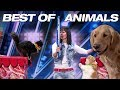 Download  Singing Dogs! Cat Tricks! Animal Noises From A Human! - America's Got Talent 2018 MP3,3GP,MP4