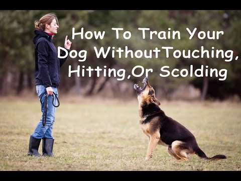 How To Train Your Dog Without Touching It!