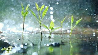 Raindrops • Relaxing Piano Music with Tropical Rain Sounds for Sleep, Work or Meditation
