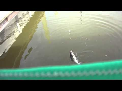 Fish Are Finally Here! Catfishing in Colonial Beach Virginia