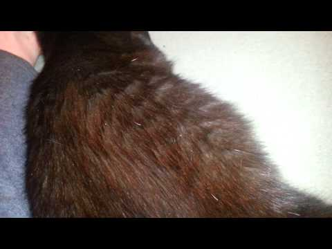 Signs Of Cat In Labor 2014