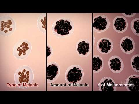 How We Get Our Skin Color | HHMI BioInteractive Video