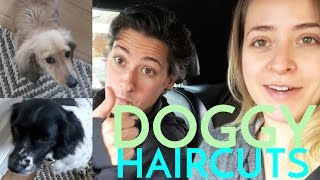 Doggy Haircuts & Storytime with MIKE! April 21st