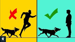 كيف تنجو من هجوم كلب؟؟  إليك ما يجب عليك فعله عند ذلك ..!!