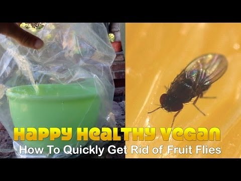 How To Quickly Get Rid of Fruit Flies (No Kill)
