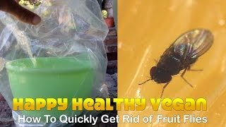 How To Quickly Get Rid Of Fruit Flies No Kill