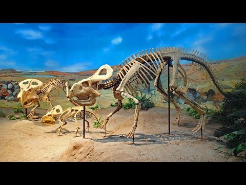 Gobi - Dinosaur