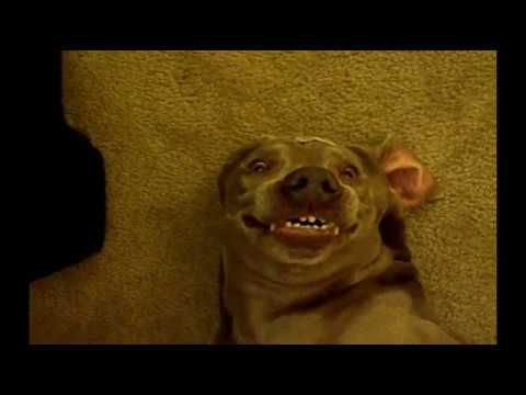 dog farts and makes funny face