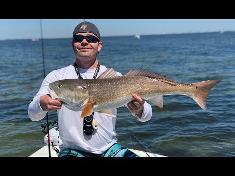 Catching Overslot Redfish - Tampa Bay, Florida