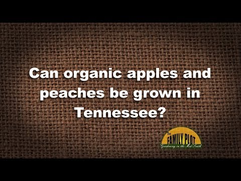 Q&A – Can organic apples and peaches be grown in Tennessee?