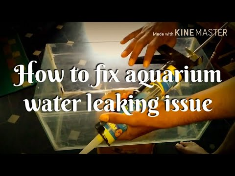 How to fix aquarium water leaking issue