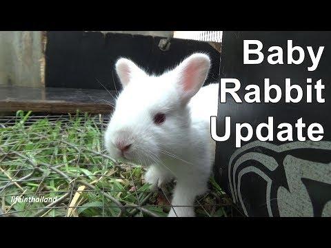 Baby rabbit update, June 2018.