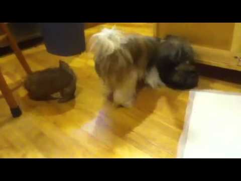 Generic cute puppy video 2013