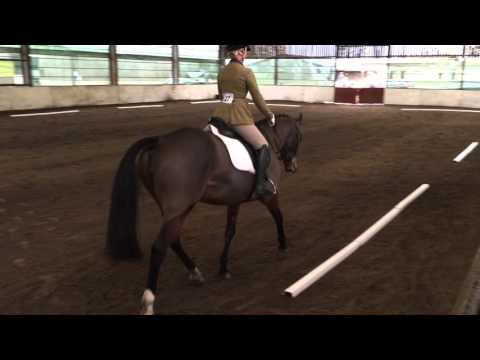 Introductory A (2008) Dressage Test at Oswestry Equestrian Centre