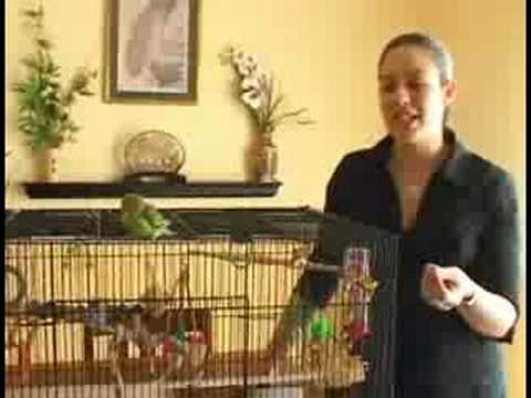 Caring for Parakeets : When to Buy a Parakeet