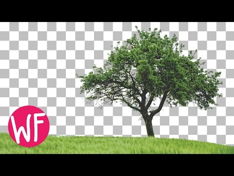 Photoshop Tutorial | How to Cut Out a Tree in Photoshop