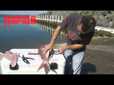 Rapala Tip Of The Week - Cleaning & Filleting Snapper