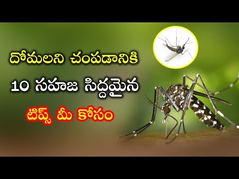 Top 10 Mosquito Killer Natural Home made Repellents | Best Health Tips Telugu