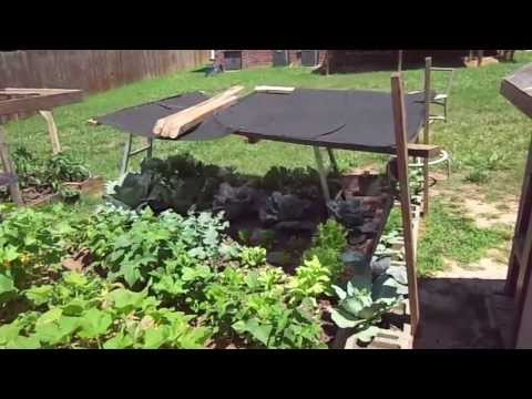 How To Shade Your Garden For CHEAP
