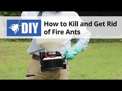 How to Kill & Get Rid of Fire Ants